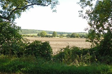 Views to Wytham Woods - Photographer Sue Osborne